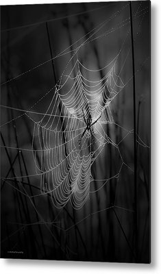 Spider Metal Prints