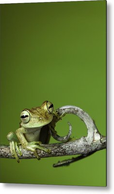 Frog Photographs Metal Prints