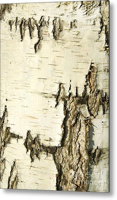 Bark Metal Prints