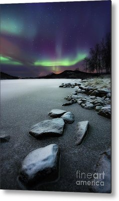 Polar Metal Prints