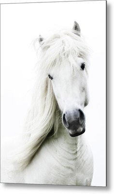White Horse Metal Prints