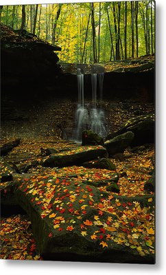 Fallen Leaf On Water Photographs Metal Prints