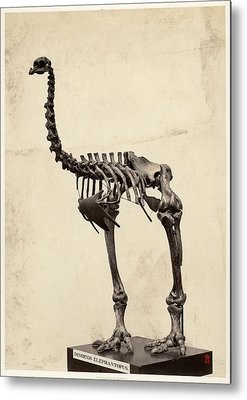 Heavy-footed Moa Metal Prints