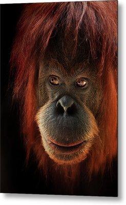 Orangutan Metal Prints