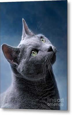 Cat Metal Prints