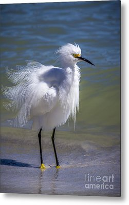 Snowy Egret Metal Prints