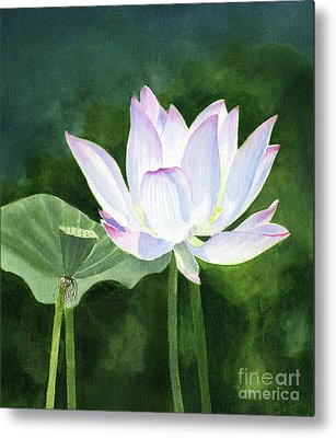Lotus Seed Metal Prints