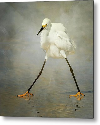 Egrets Metal Prints