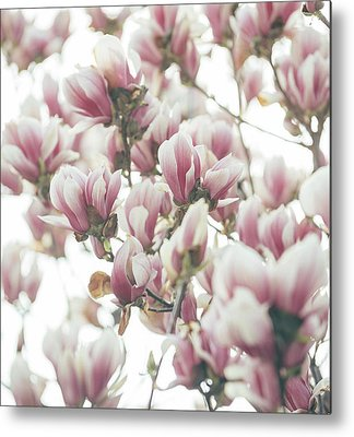 Pinks Metal Prints