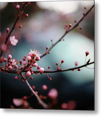 Close Focus Nature Scene Photographs Metal Prints