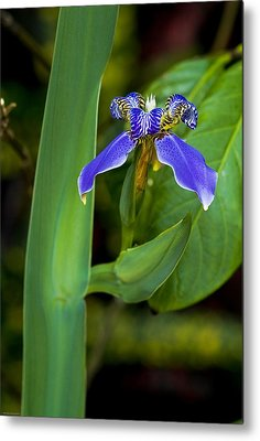 Designs Similar to Iris On Green by Ches Black