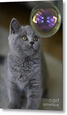 Cute Cat Metal Prints