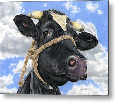 Cow Drawings Metal Prints