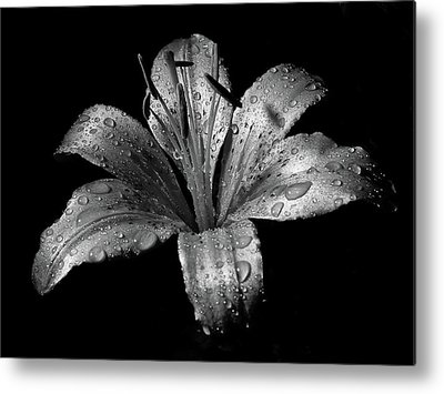 White Water Lily Metal Prints