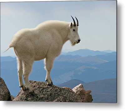 Goat Rocks Wilderness Metal Prints