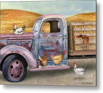 Chicken Portrait Metal Prints