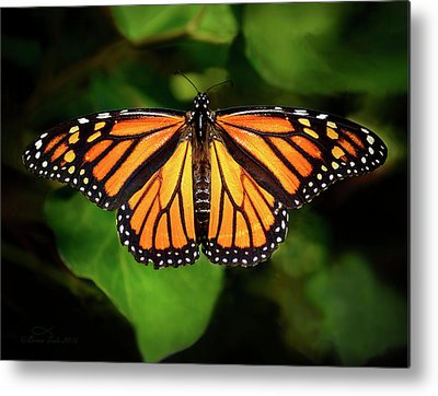 Designs Similar to Monarch Butterfly by Brian Tada