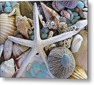 Sea Shell Metal Prints