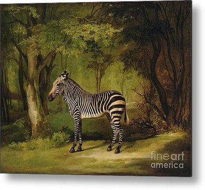 Animal Portraiture Metal Prints