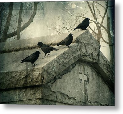 Crows Mingling Photographs Metal Prints