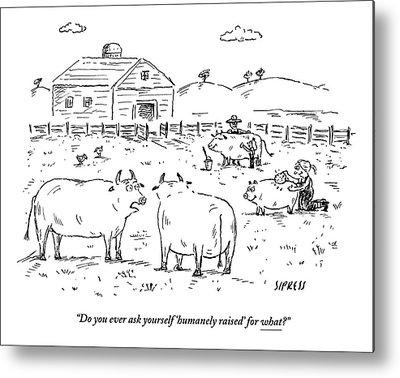 Farm Raised Pigs Metal Prints