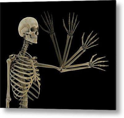 Anatomical Position Metal Prints