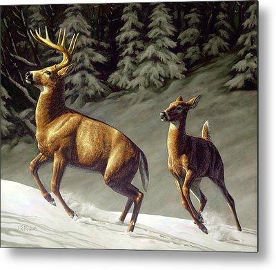 White-tailed Buck Metal Prints