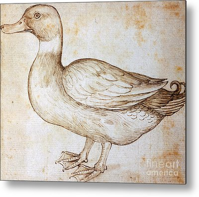 Ducks Drawings Metal Prints