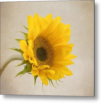 Sunflowers Metal Prints
