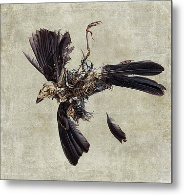 Bird Skeleton Metal Prints