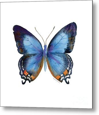 Insects Metal Prints