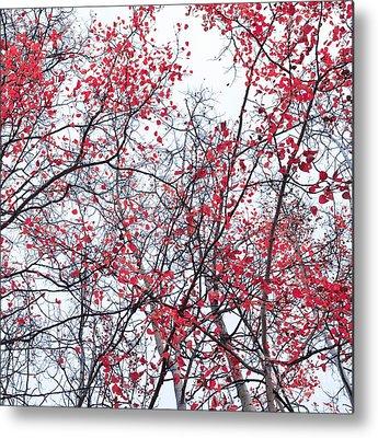 Red Leavies Photographs Metal Prints