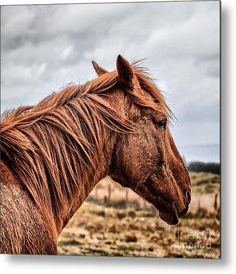 Red Horse Metal Prints