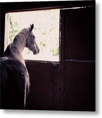 Horses Metal Prints