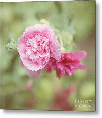 Pink Althea Metal Prints