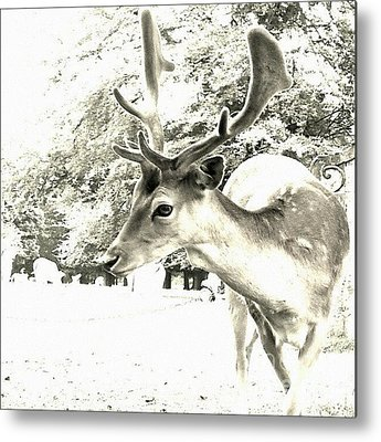 Wildlife Metal Prints