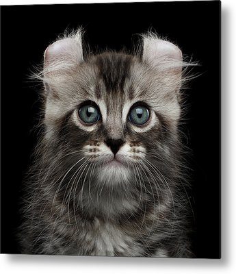 Kitten Photographs Metal Prints