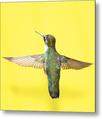 Hummingbird Metal Prints
