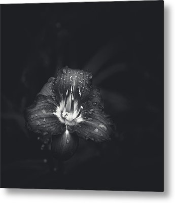 Flowers And Water Drops Metal Prints