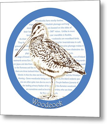 Woodcock Metal Prints