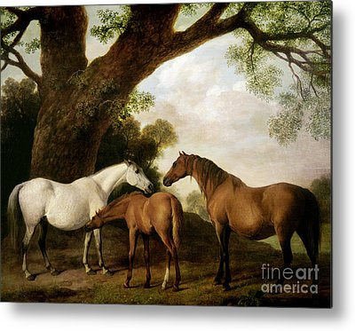 Mare And Foal Metal Prints