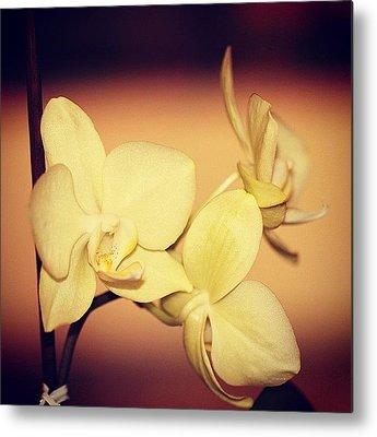 Orchid Macro Metal Prints