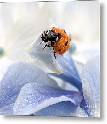 Ladybug Metal Prints