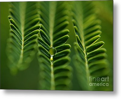 Metal Print featuring the photograph  A Green Drop by Michelle Meenawong