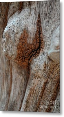 Metal Print featuring the photograph  A Part Of A Trunk by Michelle Meenawong