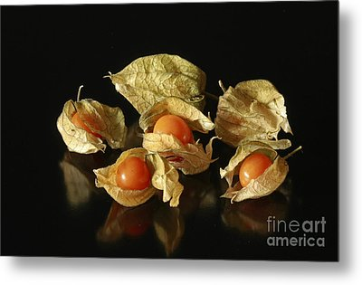 A Taste Of Columbia Physalis Aztec Golden Goose Berry  Metal Print by Inspired Nature Photography Fine Art Photography