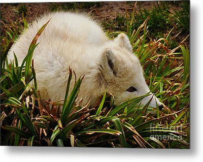 Metal Print featuring the photograph  A White Fox by Mindy Bench