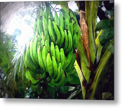 Banana Plants Metal Print by Lanjee Chee