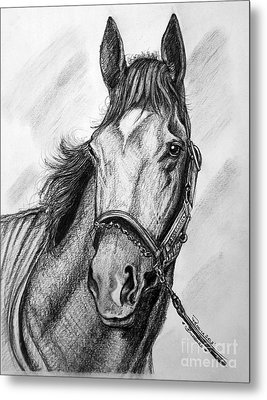 Barbaro Metal Print by Patrice Torrillo