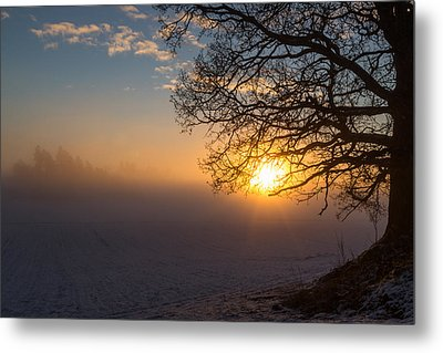 Sunbeams Pour Through The Tree At The Misty Winter Sunrise Metal Print